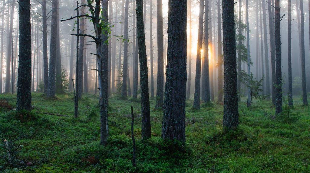 Forest - Sven Zacek