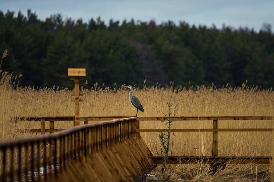 Hiiumaa nature II - Hiiumaa Fotoprojekt