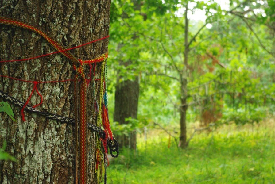 Tammealuse tree in Viru county