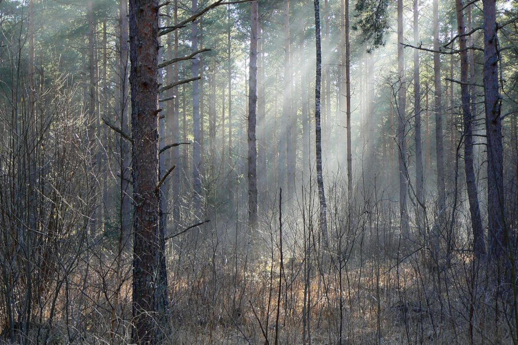 26. Metsas Tundus huvitav ja salapärane ... Nagu kummituste metsas.
