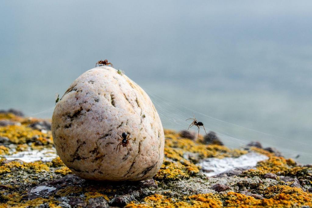 Pilt on tehtud Aksil, kolme päevasel matkal Aksi-Keri-Prangli. Algul mööda randa kõndides nägin lihtsalt väikest ümarat kivi suurel kivil ja mõtlesin kiire klõpsu teha. Lähemalt vaadates selgus aga, et seal tegutseb lausa kolm ämblikku ja kaks lehetäid. Tegin lähemalt veel paar pilti ja jalutasin edasi.
