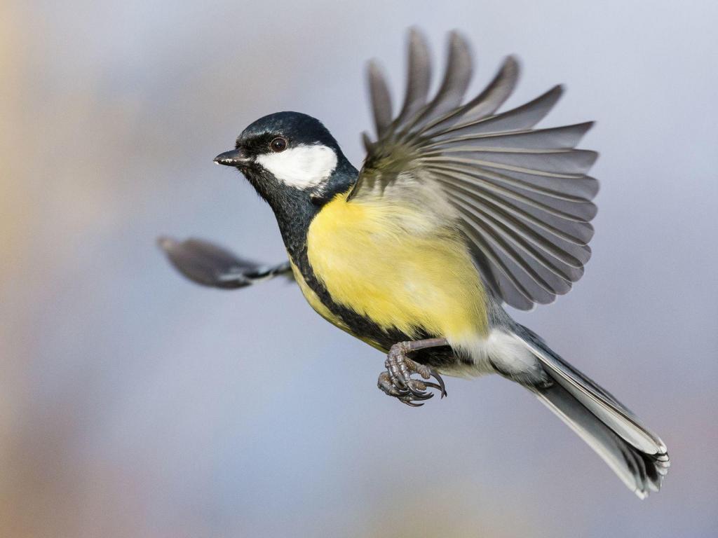 Tihaseid lennult pildile püüdes, saab eriti hea ettekujutuse nende hämmastavast kiirusest.