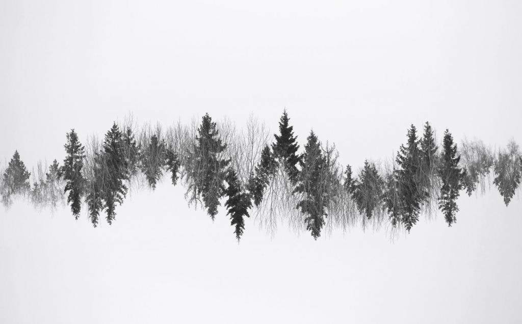 Rabasaare puulatvu ühele kaadrile kahel korral (ehk topeltsäri), õigetpidi ja tagurpidi, pildistades tekkis sakiline muster, mis meenutas südamepilti - kardiogrammi. Metsa süda töötab talle omases rütmis.