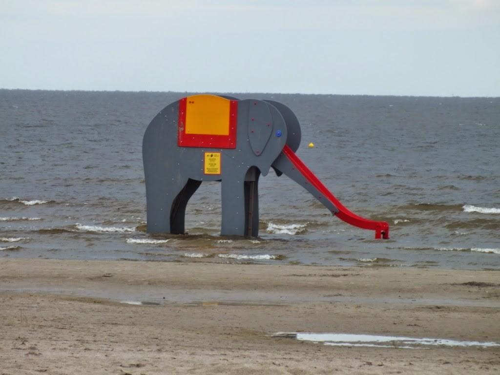 An elephant in Parnu - Looduscalendar