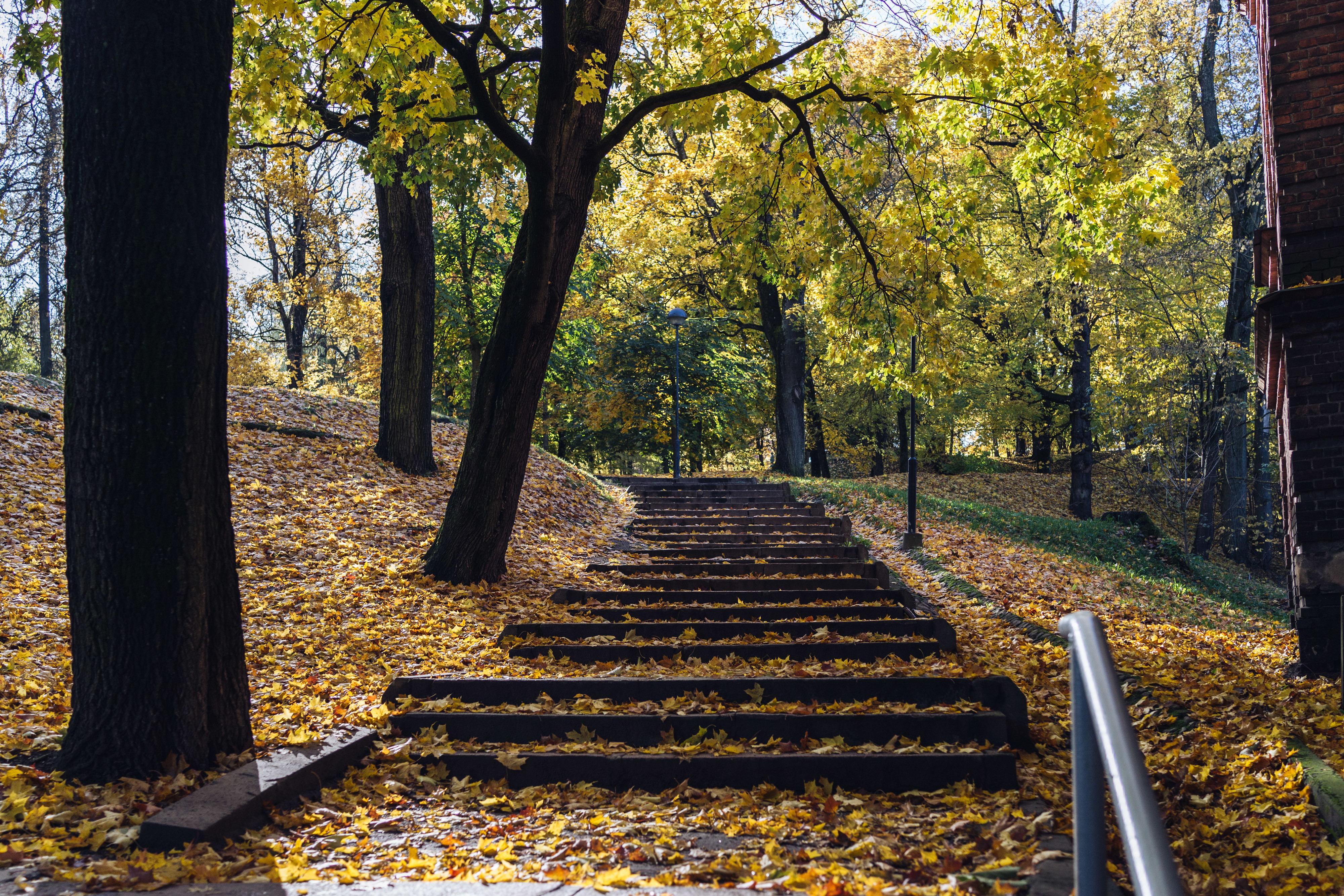 Toome, Tartu. Then the leaves start to turn in tides – the golden apex of the autumn is upon us. A dreadful time for all the diligent park supervisors who try to mitigate everyone's awe with their gasoline-powered leaf blowers. That's the actual beginning of the autumn –  the first loud scream of the first blower when first yellow leaf falls from in the park.