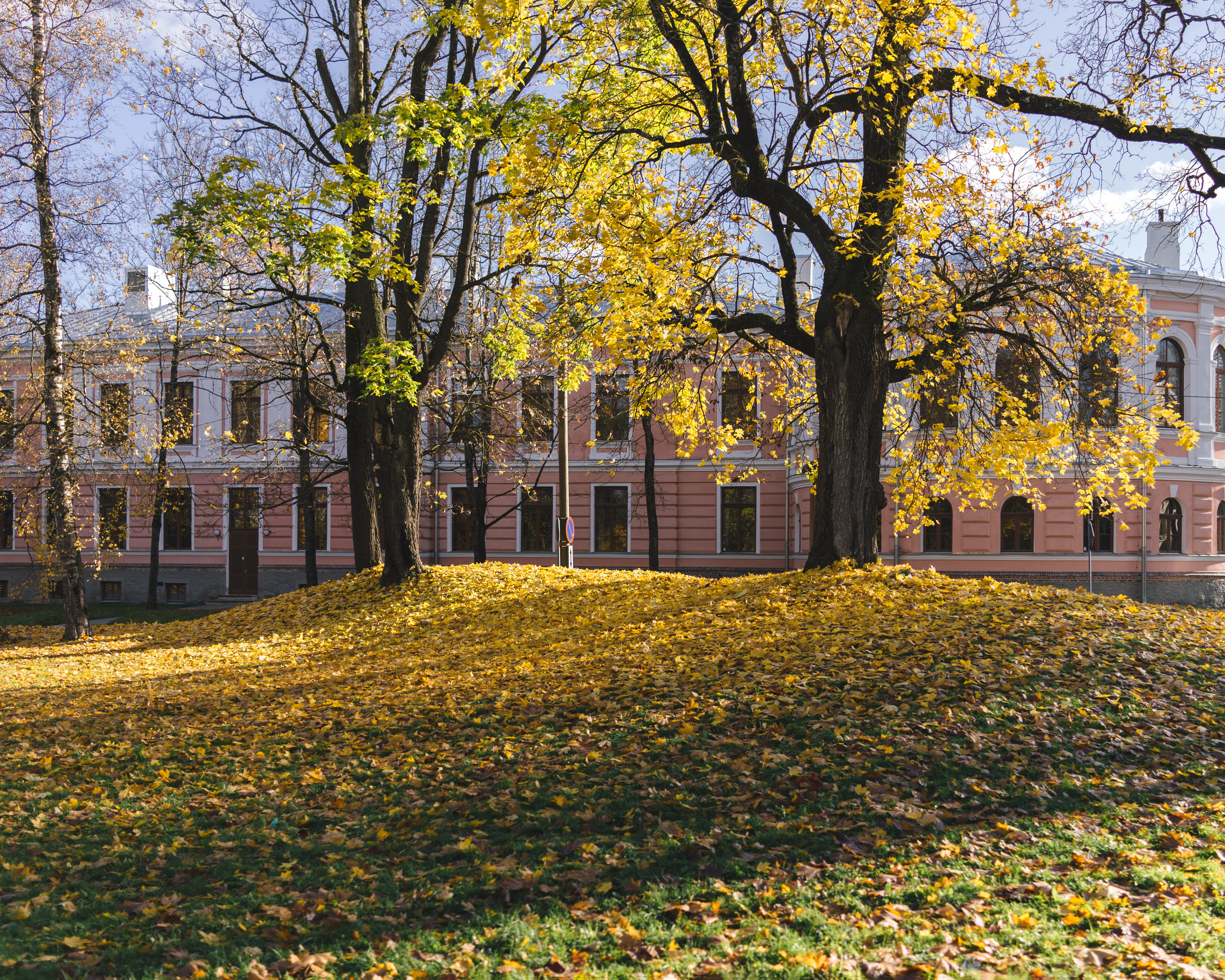 Kassitoome, Tartu. It's not a very long show. Not every year the fall of the leaves is accompanied by the sunny weather. But then they get in sync and it will be really powerful, like a bunch of dragons lying in their piles of gold.